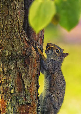 Saber-toothed Photograph - Snaggletooth - Saber Tooth Squirrel by Bill Tiepelman