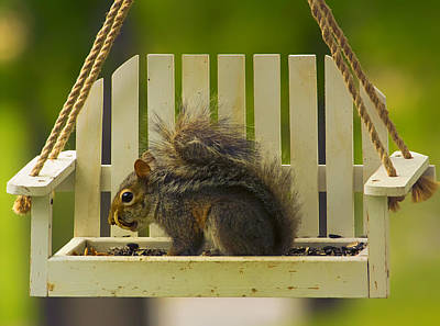 Birdseed Photograph - Snaggletooth Squirrel On Feeder by Bill Tiepelman