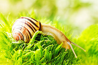 Y120817 Photograph - Snail by Copyright OneliaPG Photography