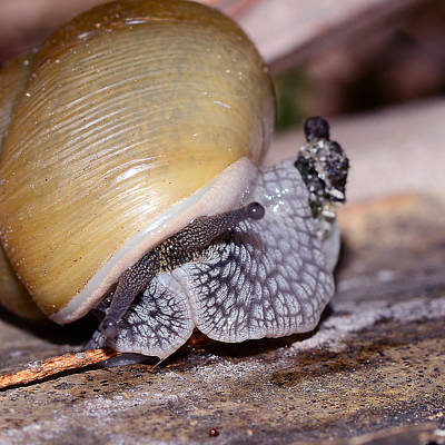 Snail Art Print by Michelle Armstrong