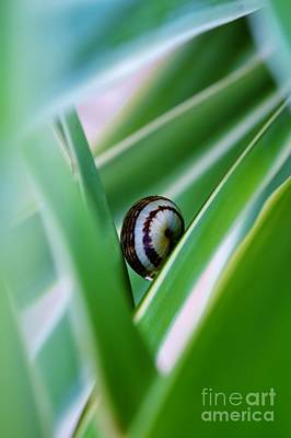 Art Print featuring the photograph Snail On Yuca Leaf by Werner Lehmann