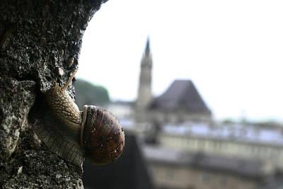 Photograph - Snail Salzburg Austria by Benjamin Dahl