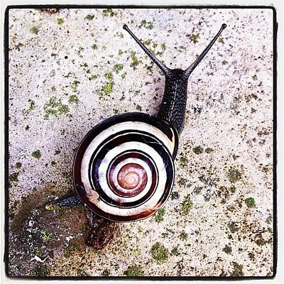 Colourful Wall Art - Photograph - #snail #spiral by Umberto DiPalma