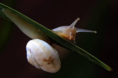 Slip Photograph - Snail by Stelios Kleanthous