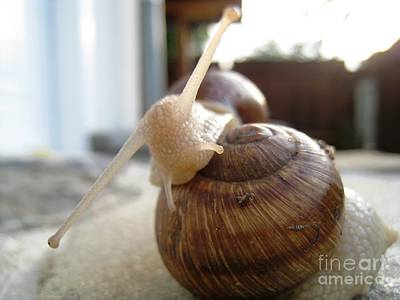Art Print featuring the photograph Snails 10 by AmaS Art