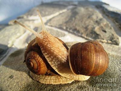 Art Print featuring the photograph Snails 11 by AmaS Art