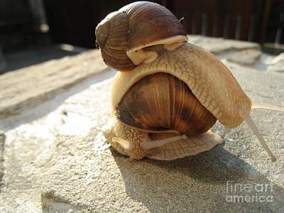 Art Print featuring the photograph Snails 14 by AmaS Art
