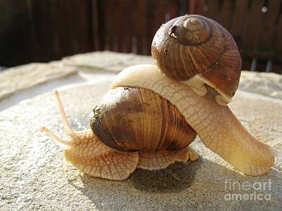 Art Print featuring the photograph Snails 17 by AmaS Art