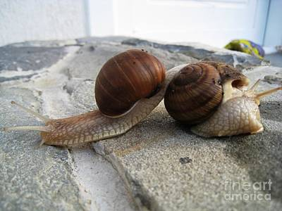 Art Print featuring the photograph Snails 19 by AmaS Art