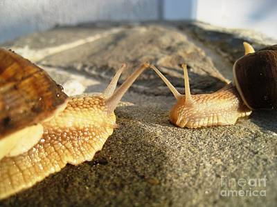 Art Print featuring the photograph Snails 2 by AmaS Art