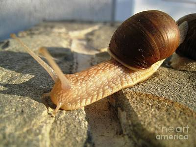 Art Print featuring the photograph Snails 21 by AmaS Art