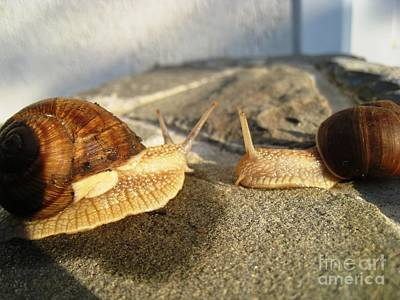 Art Print featuring the photograph Snails 3 by AmaS Art