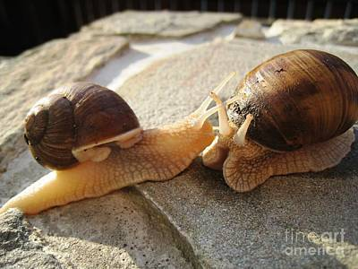 Art Print featuring the photograph Snails 5 by AmaS Art