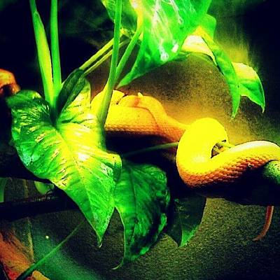 Reptiles Wall Art - Photograph - Snake At The Toronto Zoo.... #animal by Mr. B