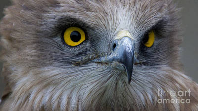 Snake Eagle 2 Art Print by Heiko Koehrer-Wagner