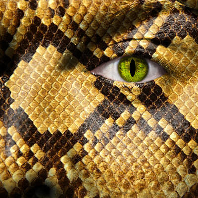 Snake Eye Art Print by Semmick Photo