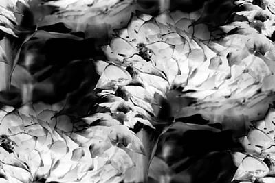 Photograph - Snake Flower 3 by Elizabeth  Doran