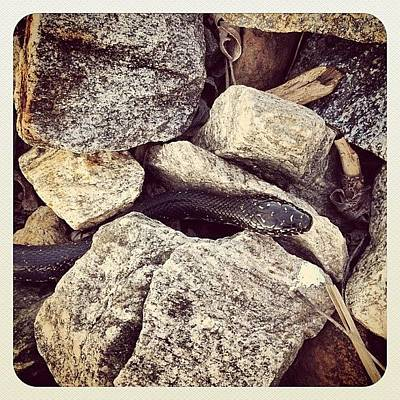 Reptiles Photograph - #snake #indiana #dailywalk by Melissa Wyatt