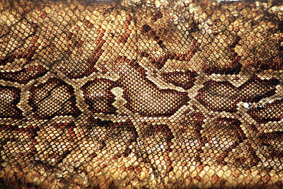 Sensory Perception Photograph - Snake Skin by Abner Merchan