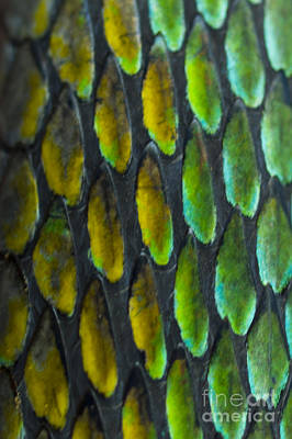 Print featuring the photograph Snake Skin by John Burns