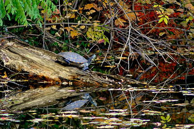 Autumn Soup Photograph - Snapper Turtle by Frozen in Time Fine Art Photography