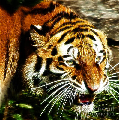 Tiger Fractal Photograph - Snarling Tiger by Darleen Stry