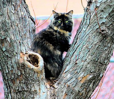 Of Calico Cats Photograph - Snickers Caught In The Act by Cheryl Poland