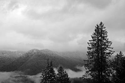 Pilchuck Photograph - Snohomish National Forest Black And White by Twenty Two North Photography
