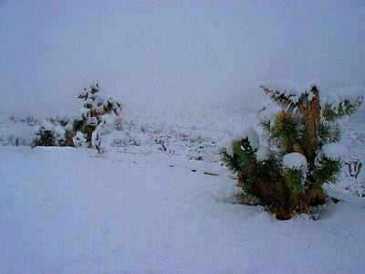 Photograph - Snow Cactus by Jonathan Barnes