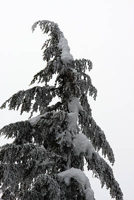 Photograph - Snow Covered - 0003 by S and S Photo
