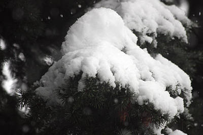 Photograph - Snow Covered - 0017 by S and S Photo