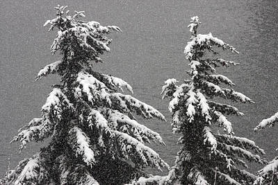 Photograph - Snow Covered - 0019 by S and S Photo