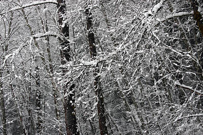 Photograph - Snow Covered - 0024 by S and S Photo