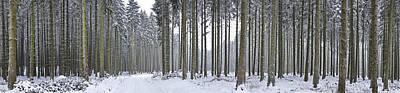 Snow-covered Forest In Winter Art Print by Hans-Peter Merten