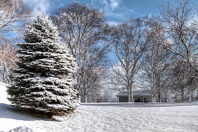 Snow Covered Pine Art Print by Richard Gregurich