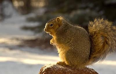 Squirrel Photograph - Snow Covered Squirrel by LeeAnn McLaneGoetz McLaneGoetzStudioLLCcom