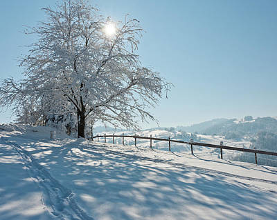 Winter Landscapes Photograph - Snow Covered Tree With Sun Shining Through It by © Peter Boehi