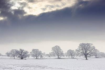 Snow Covered Trees And Field Art Print by John Short