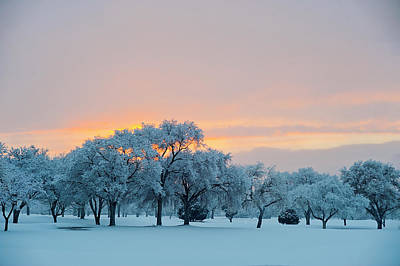 Snow Covered Trees At Sunset Art Print by Nancy Newell