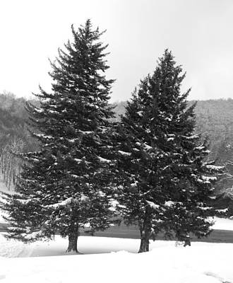 Snow Covered Trees Art Print by Carrie Munoz