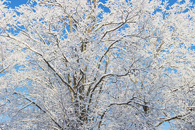 Photograph - Snow Covered Trees by Keith Webber Jr