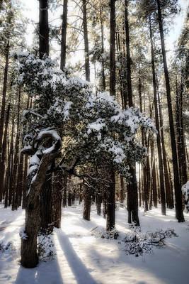 Photograph - Snow Day  by Saija  Lehtonen