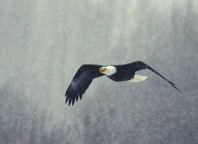 Art Print featuring the photograph Snow Flight by Myrna Bradshaw