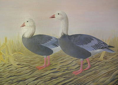 Snow Geese Art Print by Alan Suliber