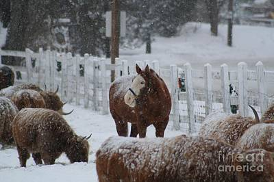 Snow Horse Art Print by Linda Jackson