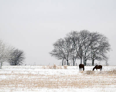 Photograph - Snow Horses by David Chalker