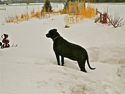 Dog In Landscape Photograph - Snow Hunting by Randy Rosenberger