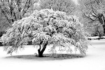 Photograph - Snow In Connecticut by John Scates