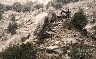 Photograph - Snow In The Canyon by Fred Lassmann