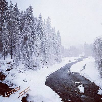 Landscapes Wall Art - Photograph - Snow Landscape - Trees And River by Matthias Hauser